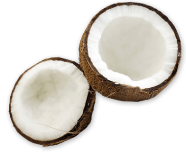 Coconut-PNG.png